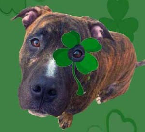 Support Pitties.Love.Peace by playing the GET LUCKY GAME!  BUY A SHAMROCK NECKLACE at the event for a chance to WIN a $100 Pet Valu Gift Card!