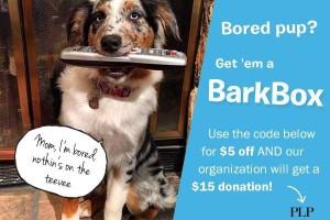 Bark box discount