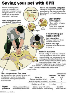 Saving your dog with CPR