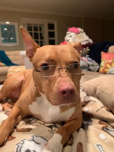 pitbull eyeglasses