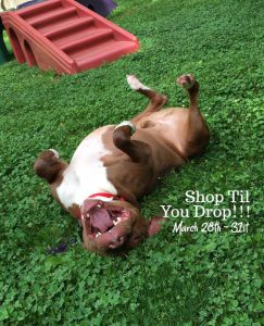 facebook-auction-fundraiser-pitties