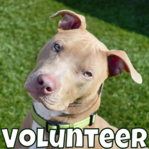 Links to Volunteer Page